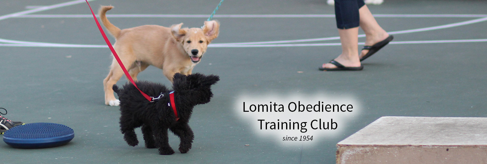 Lomita Dog Training - puppies playing