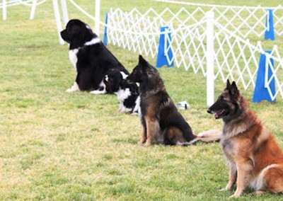 Ring Workshop – AKC Competition Obedience