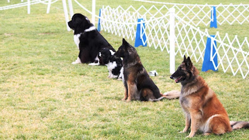 Ring Workshop Akc Competition Obedience Lomita Dog Training
