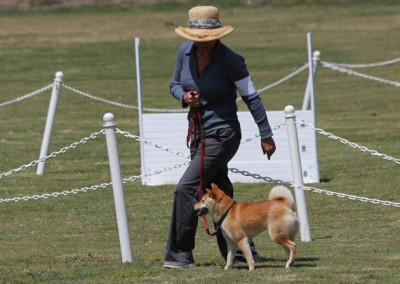 Beginning – AKC Competition Obedience