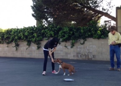 Intermediate Dog Training