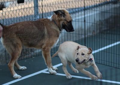 Puppy Development & Manners